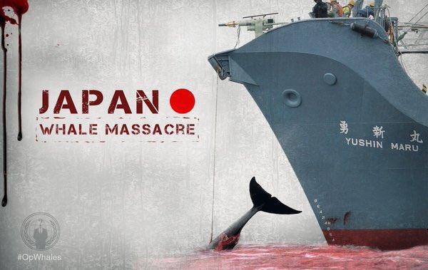 日本の捕鯨を反対するポスター